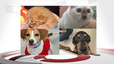 VIEWER PHOTOS: National Pet Day