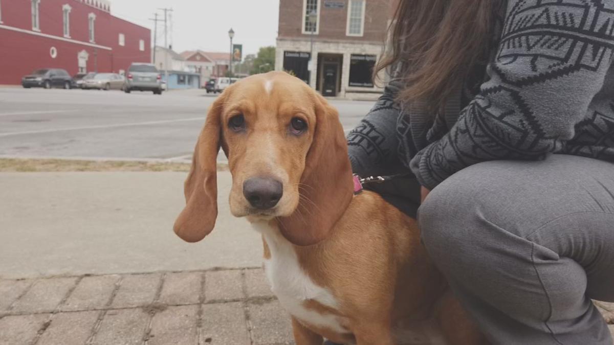 Southern Indiana basset hound spreads joy around country