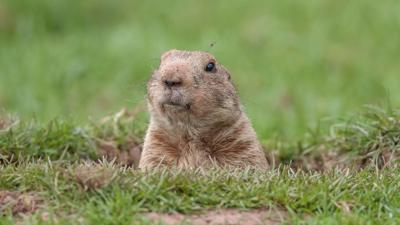 OPINION | 3 reasons meteorologists hate groundhogs