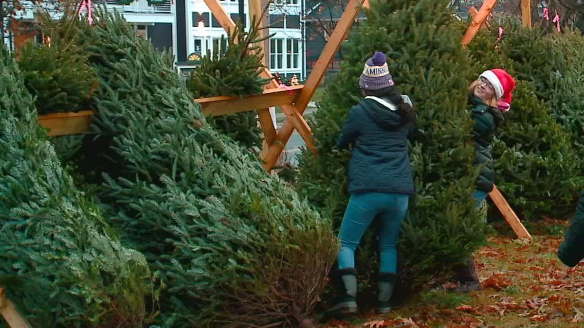 GIRLS SCOUT CHRISTMAS TREES STOLEN 12-2-19.jpg