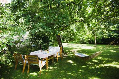 4 Ways Shade Trees Benefit the Planet and Your Pocketbook