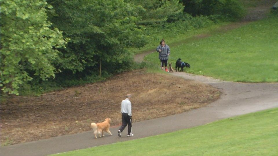 Coyote sightings in Cherokee Park have dog owners concerned