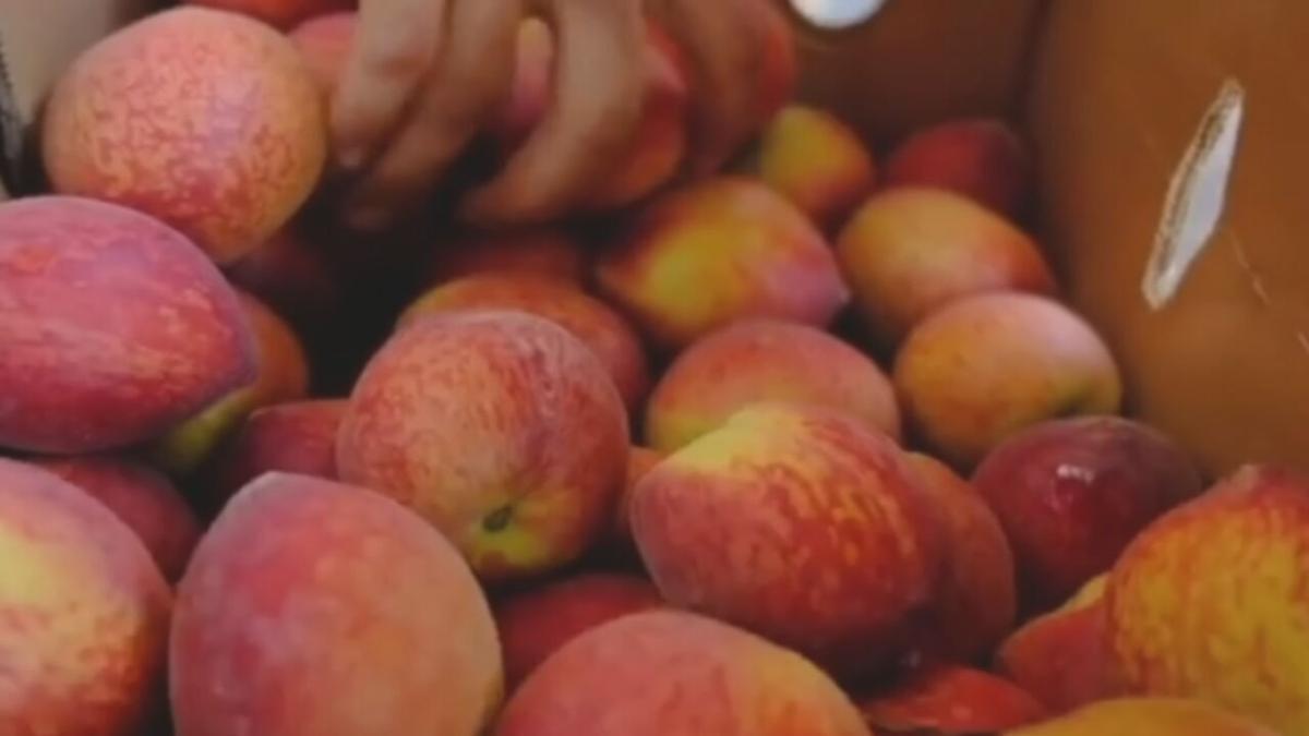 The Peach Truck peaches.jpeg
