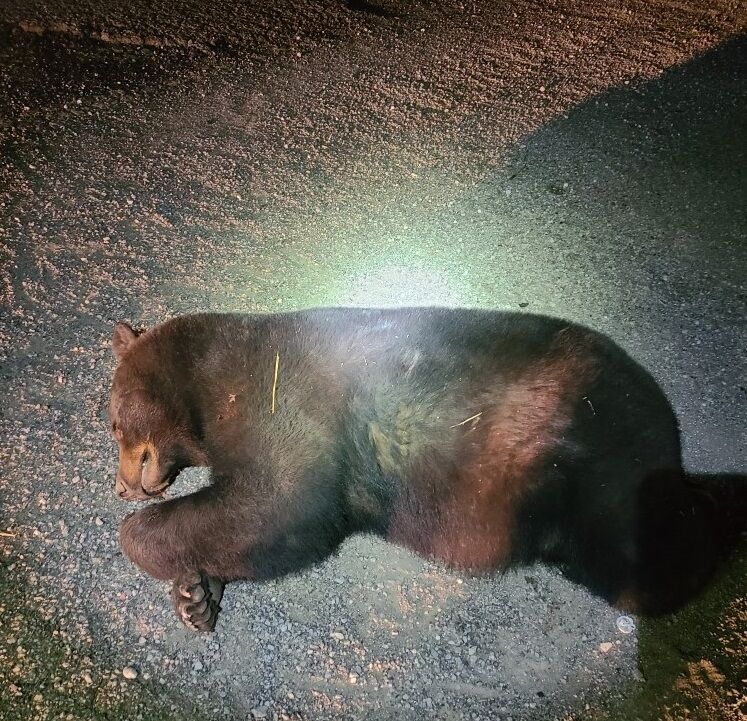 Bear dies after being struck by car in Meade County
