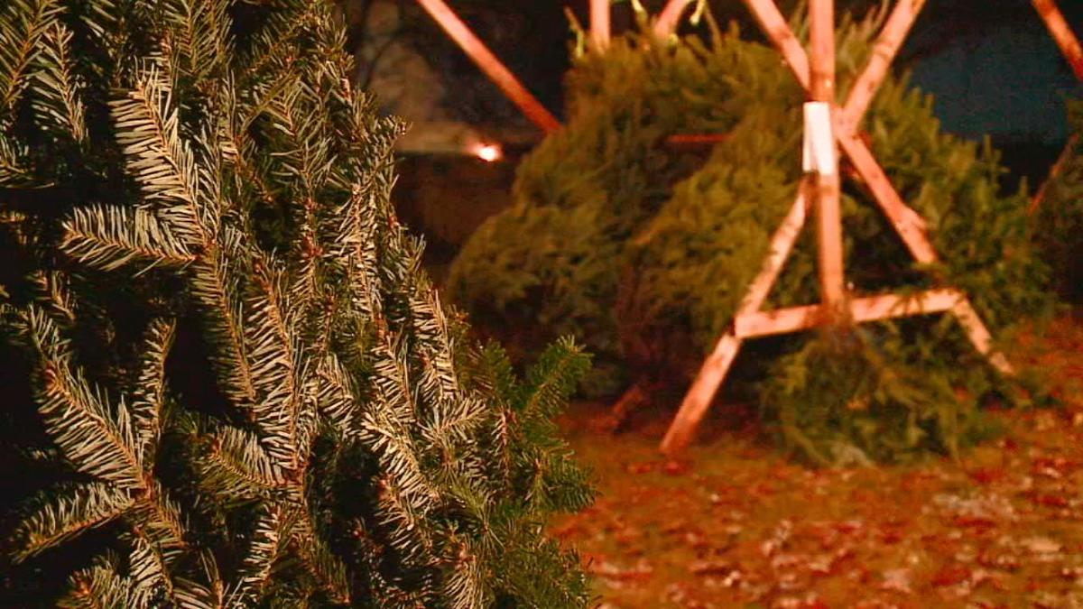 GIRLS SCOUT CHRISTMAS TREES STOLEN 12-2-19 (1).jpg