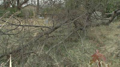 Scardein Cemetery overgrown