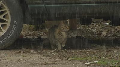 Several cat carcasses found near Churchill Downs as cat population in the neighborhood grows