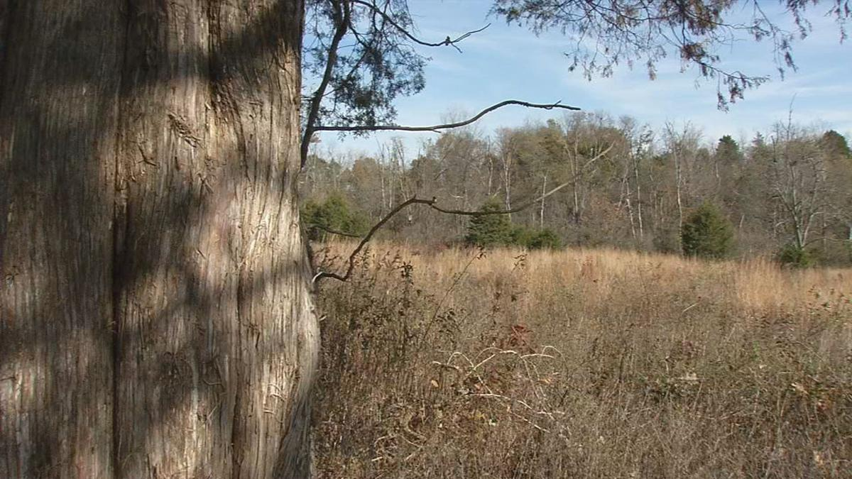 Woods will be full of hunters opening weekend