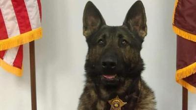 Diesel, a police K9 for the Bartholomew County Sheriff's Department (Indiana)