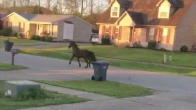 VIDEO | Fairdale neighborhood gets surprise visitor