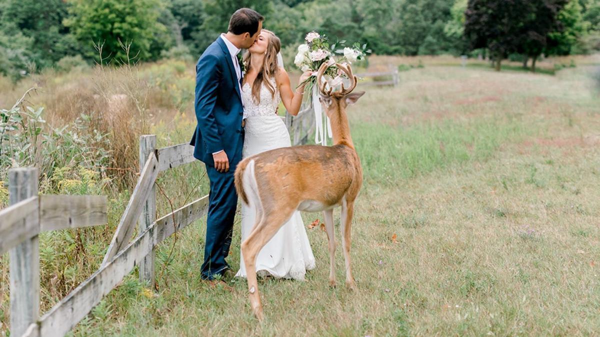 deer wedding crasher 2
