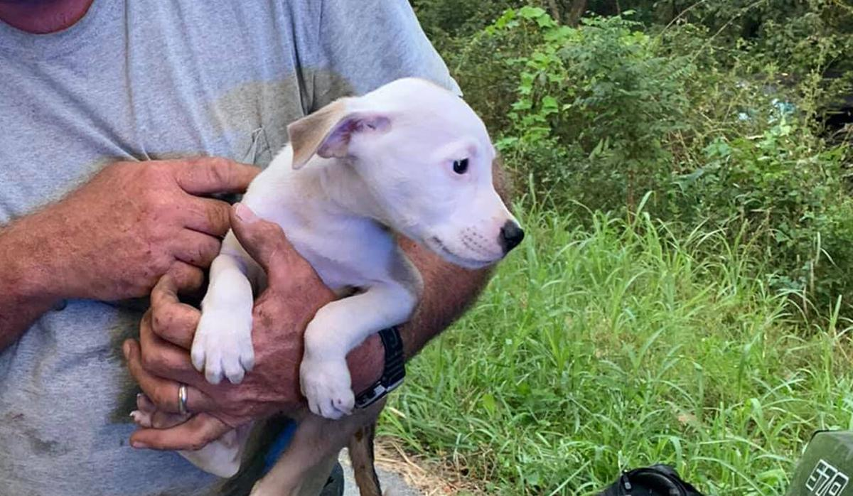 Puppy rescued from abandoned truck in Spencer County on Sept. 10, 2021