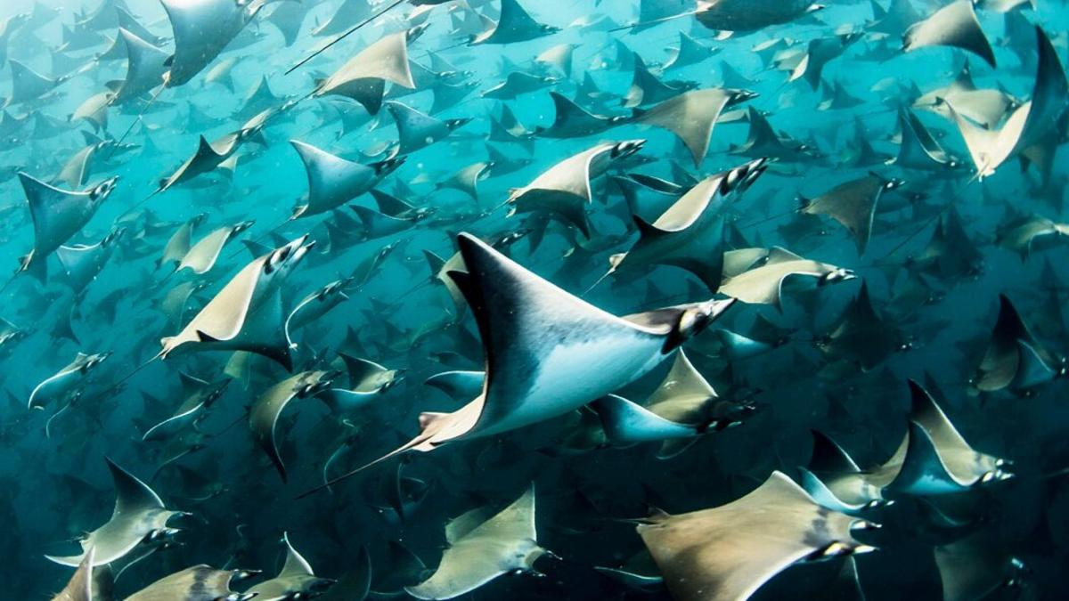 Devil Rays Swimming 10-15-19 Fox News.jpg