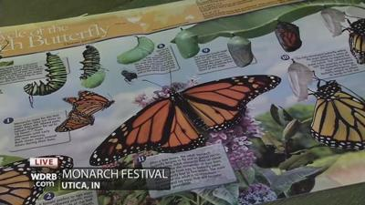 A festival in Utica celebrates the migration of the Monarch Butterfly