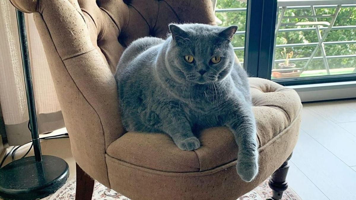 Pitoe Cat in chair