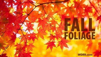 Has The Heat Delayed Fall Foliage?
