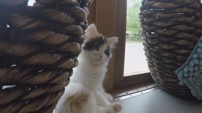 Purrfect Day kitten shower