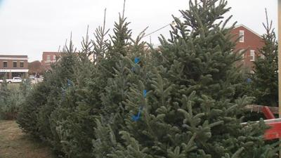 Christmas tree shortage increases prices this holiday season