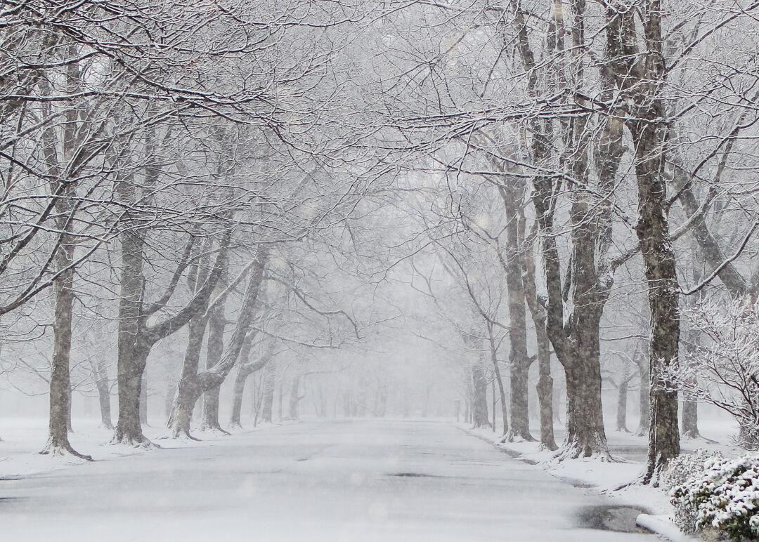 Snow in Louisville-1-27-21-Eric Crawford (6).jpg