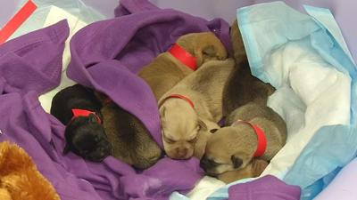 11 newborn puppies dumped in ravine rescued by Louisville group