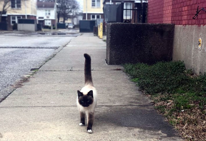 Cat walking the streets after 3-14-19 LMPD cat rescue