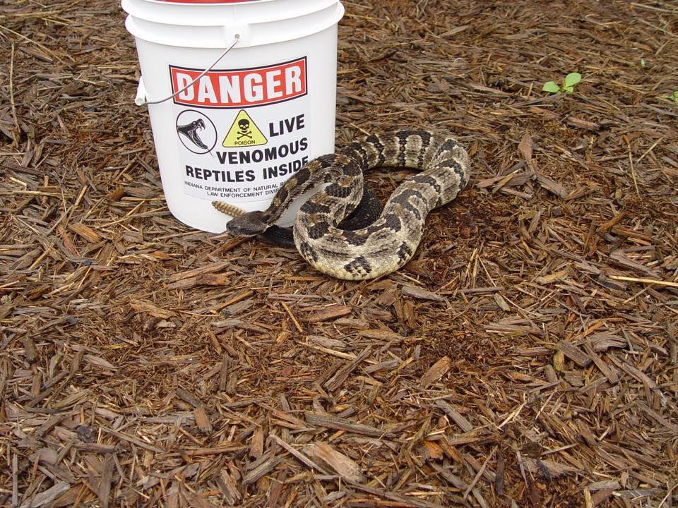 Rattlesnake found in Seymour, Indiana garage in Aug. 2019