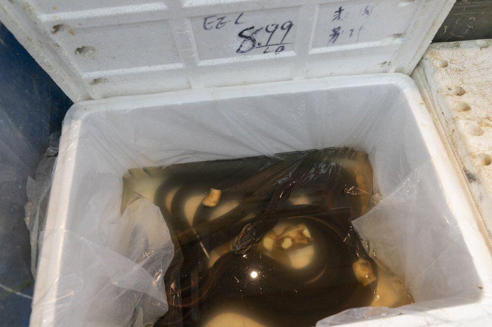Asian swamp eels dumped in New York - AP FILE (2).jpeg