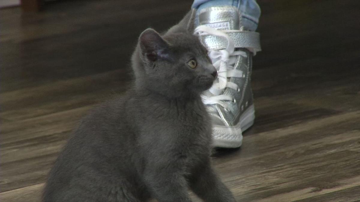 Kitten shower 2.jpg
