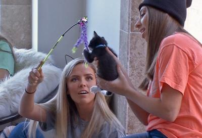 Plans announced for Louisville's first 'Cat Cafe' in the Highlands