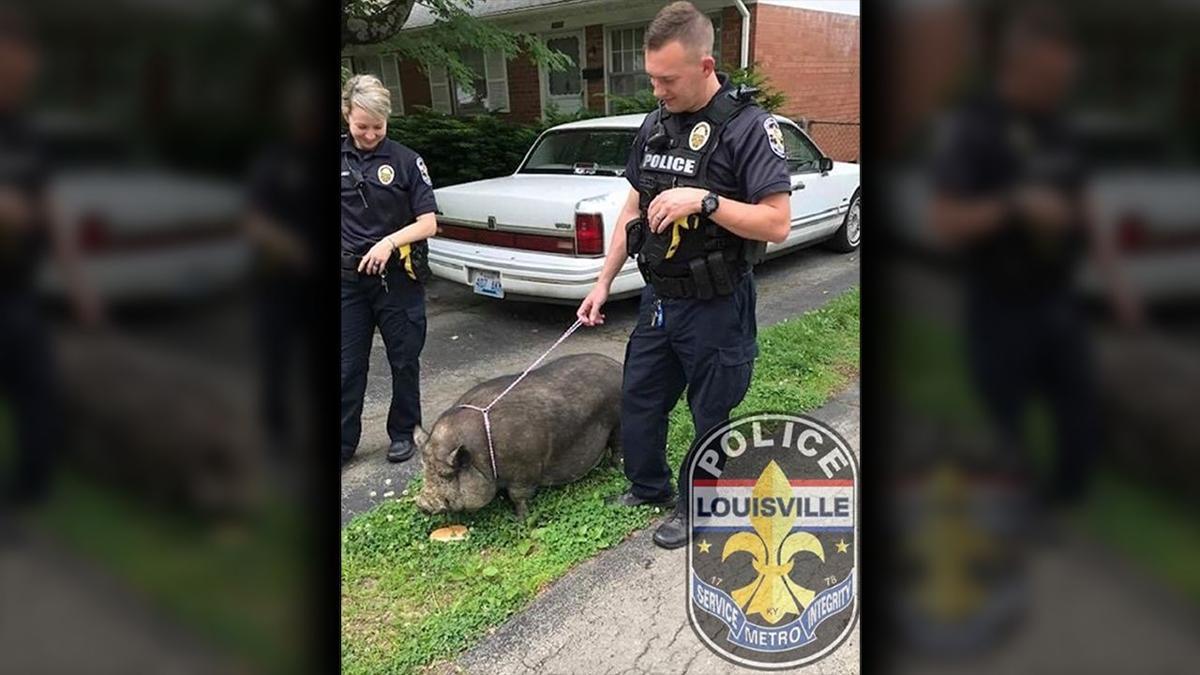 LMPD Animals_Hog 2.png