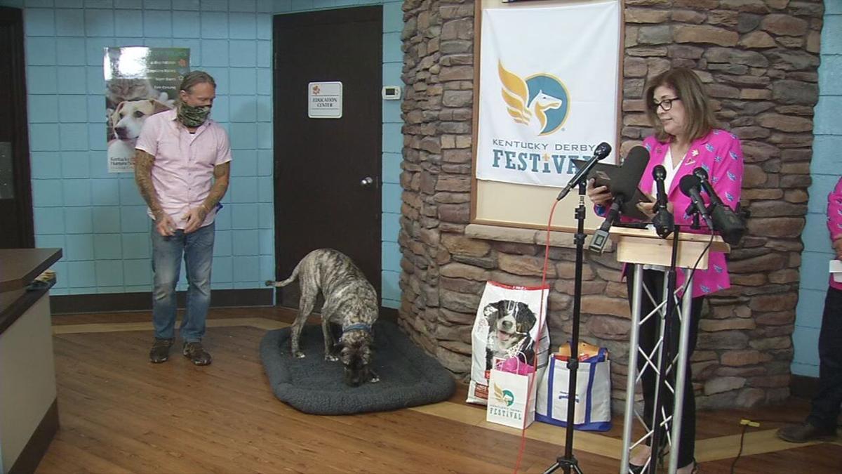 Ethan the Dog named 'Compassion Ambassador'