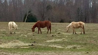 15 dead horses found on abandoned farm in Trimble County