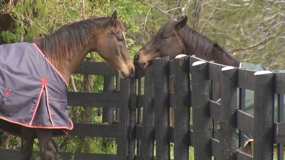 THOROGHBRED RETIREMENT FOUNDATION FARM IN OLDHAM COUNTY  - RETIRED HORSES