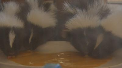 Second Chances Wildlife Center opens doors for annual Wildlife Baby Shower