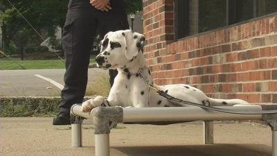 IMAGES | Oreo the Bardstown Fire dog begins her training