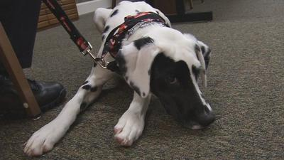Oreo the fire dog reports for duty in Bardstown