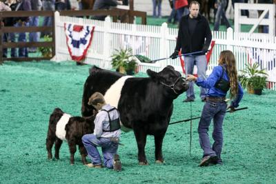 North American International Livestock Exposition runs Oct. 30 - Nov. 15