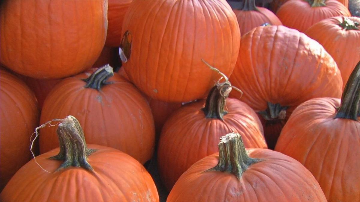 Record rainfall hurt crops, but Louisville stores are getting pumpkins from out of state