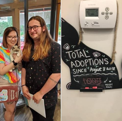 Purrfect Day Cat Cafe 1000 adoption