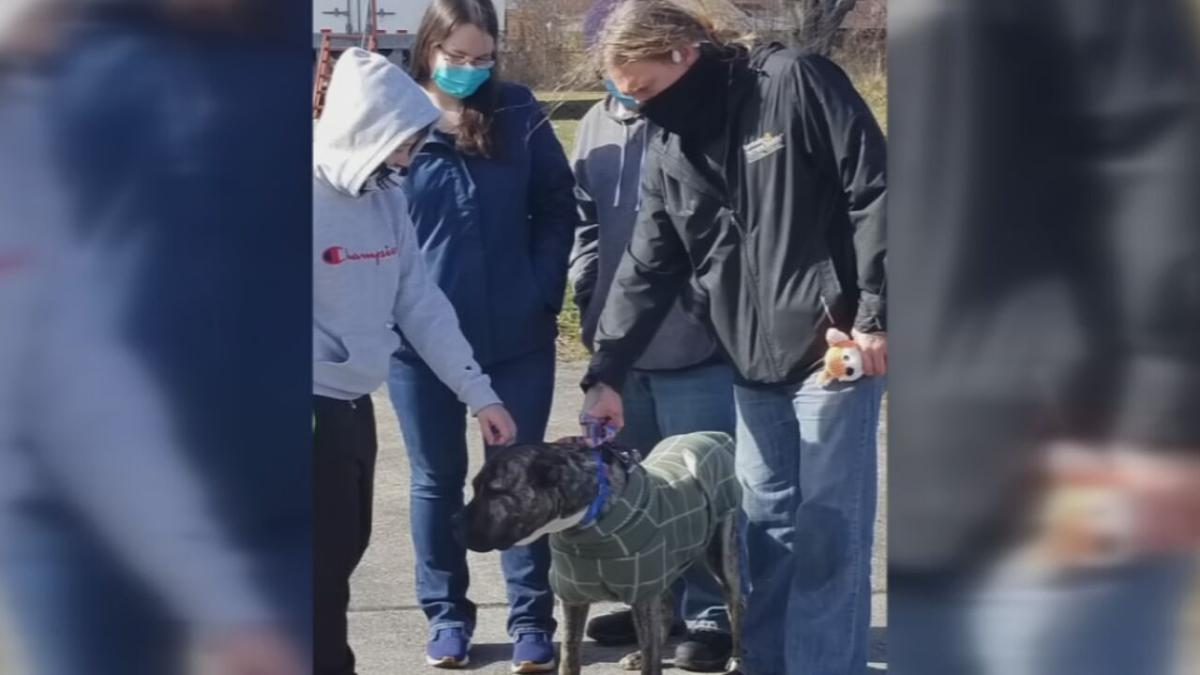 Family reunited with Ethan the dog (3/02/21)