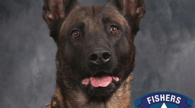 Harlej - Indiana police dog