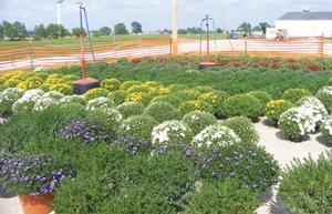 FFA plants