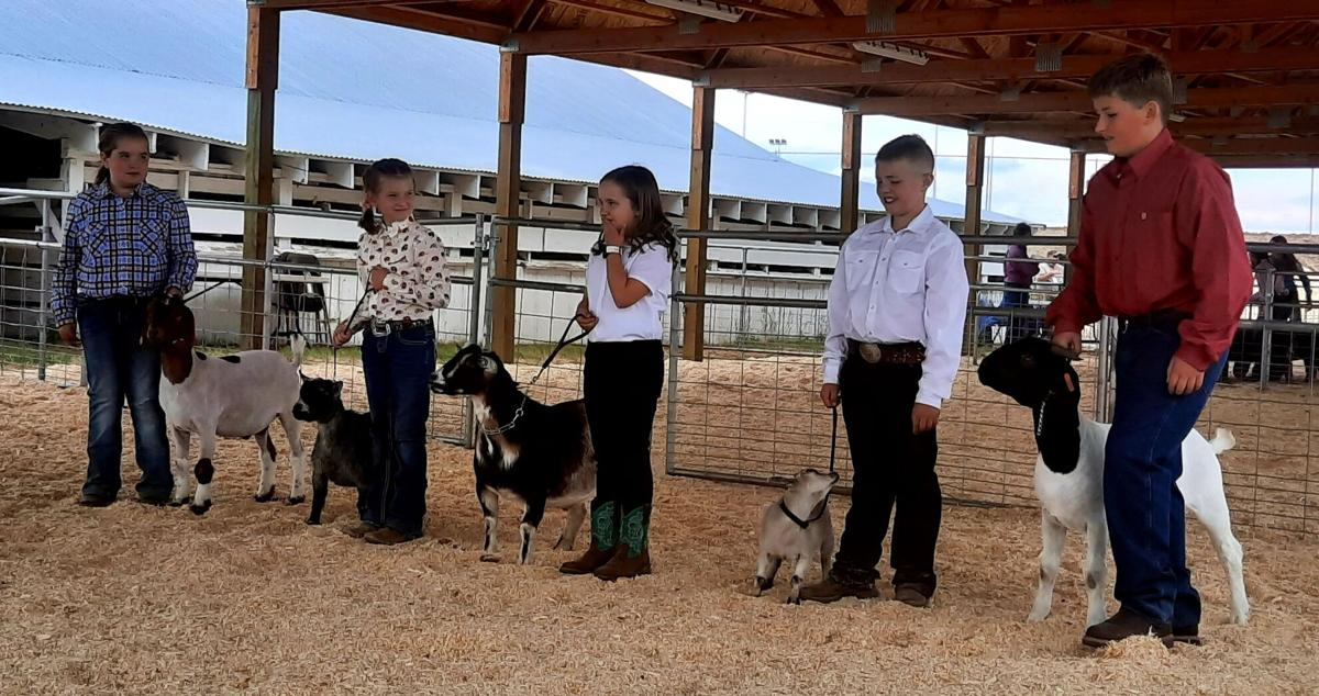 4H youth line up