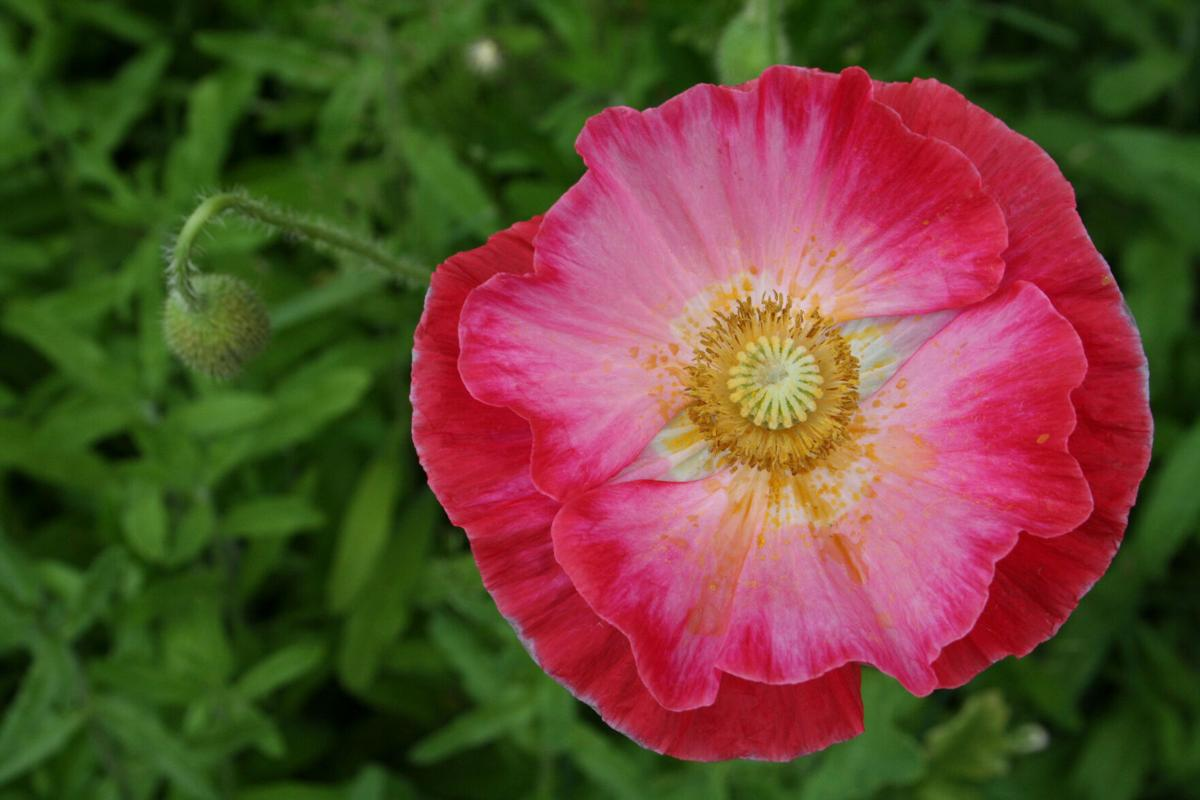 Garden color can suit your personality