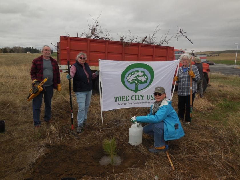 Tree Board celebrates Arbor Day by planting new trees on Jackson Street