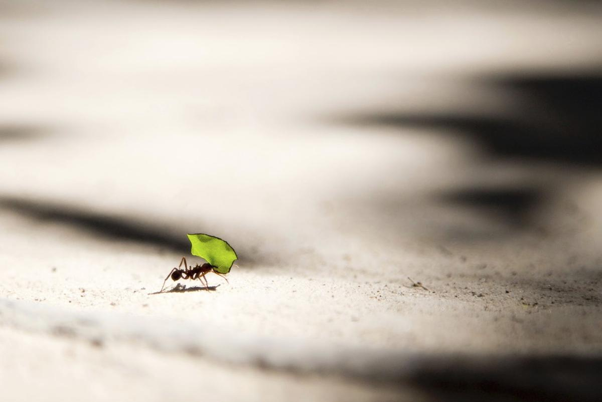 Kids & Nature Connections | Explore the interesting world of ants!