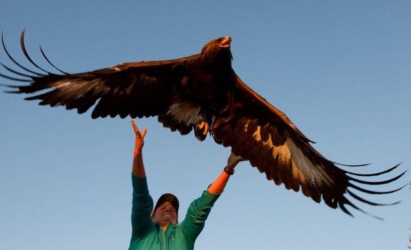 Hawkwatch.jpg