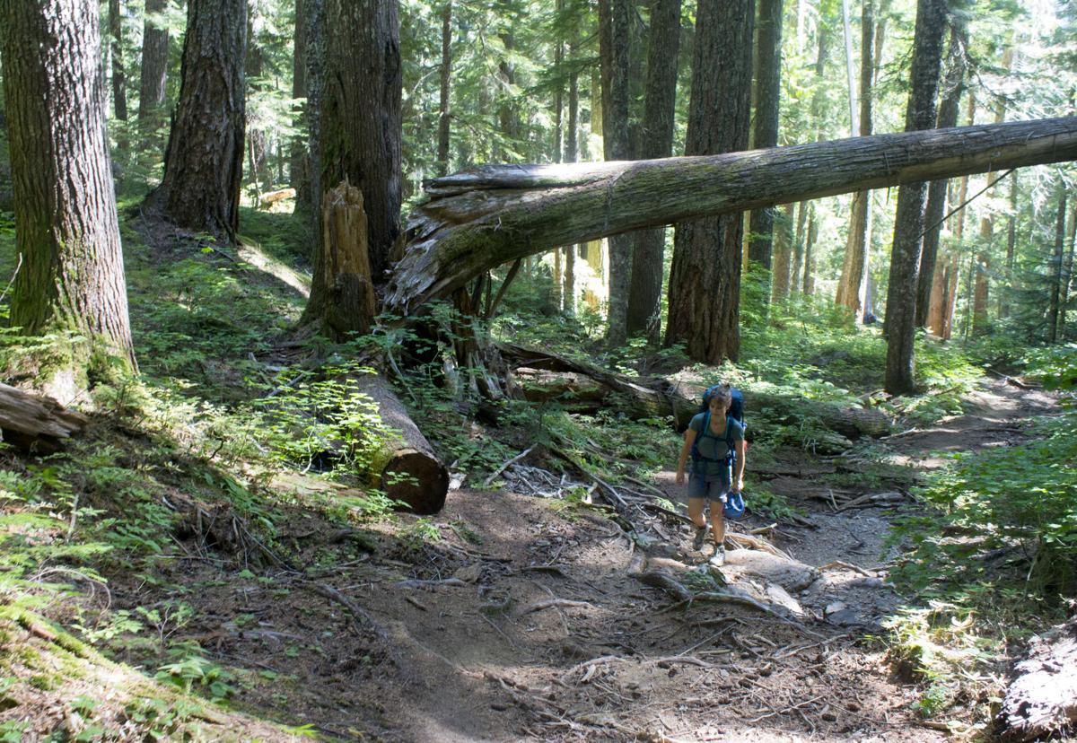 hiking through the woods.jpg