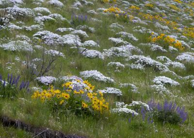 210429-newslocal-wildflowers 01.jpg