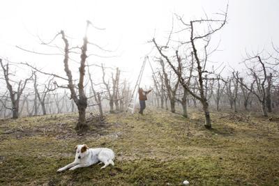 200129-newslocal-pruning 01.jpg